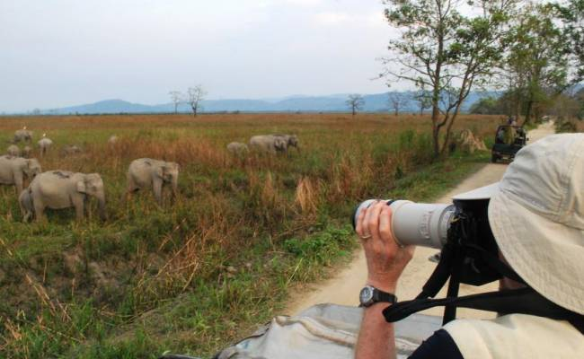 Photographing elephants on jeep safari in Kaziranga